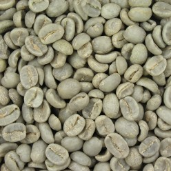 Green (unroasted) Brazilian coffee beans.