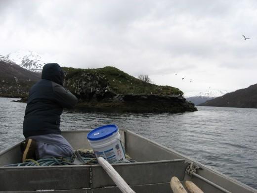 Subsistence Seagull Egg Hunting