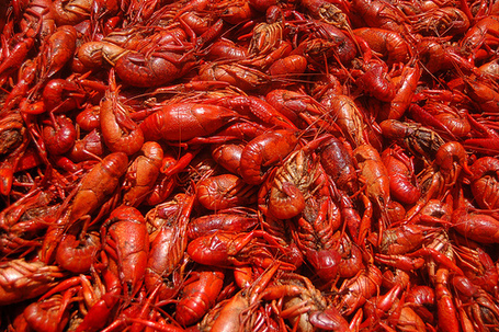 Boiled Crawfish... yummmmmmy