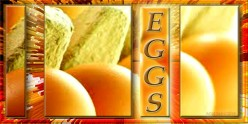 Chickens, Beginner Backyard Egg Farmer and Farm Fresh  Eggs
