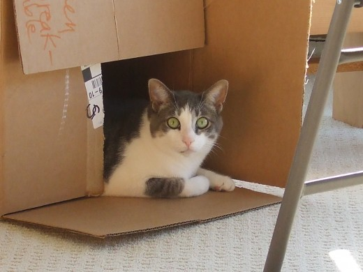 Cats and boxes are like lox and bagels.