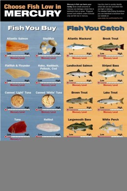 Mercury and shellfish fish to avoid during pregnancy for Mercury fish pregnancy