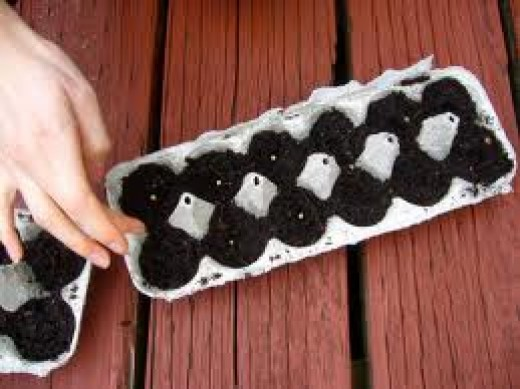 Seeds Planted In Egg Cartons - A great way to plant seedlings