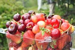red and white cherries