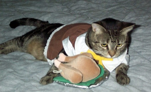 Tabby modeling the pilgrim girl costume (comes with a bonnet, turkey sold separately)