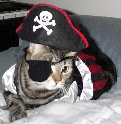 Tabby modeling the pirate girl costume
