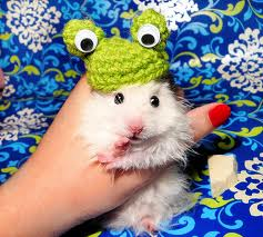 MY BANKER'S HAMSTER IS WEARING ONE.