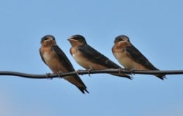 3 Birds in a row - are things coming into alignment in your life?
