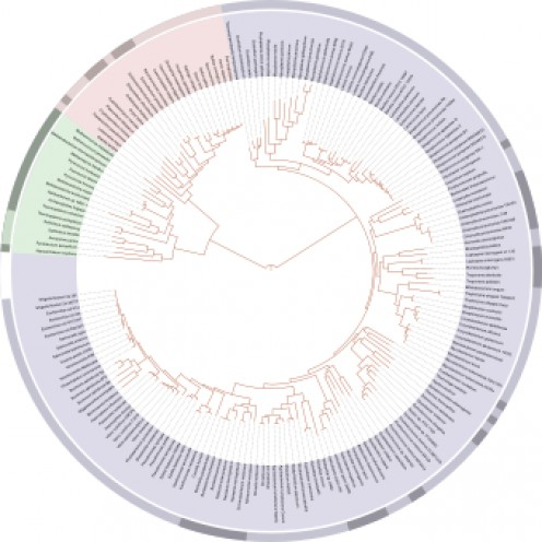 The phylogenetic tree of life. Public domain image by Ivica Letunic.