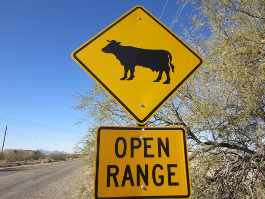 Open Range warning sign outside of Ironwood Forest National Monument