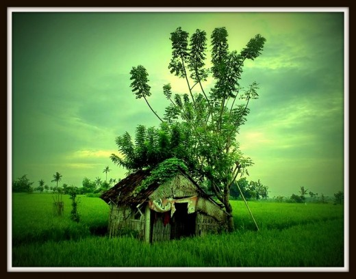Hut on Rice Field in Karangasem.