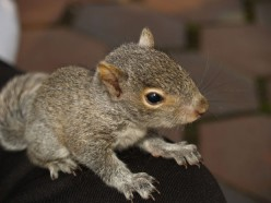 A Squirrel Named Rocky