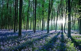 sun kissed carpet of blue