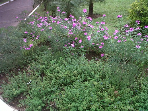 """Botanical Gardens"""