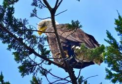 I am Gonna Fly High Like An Eagle : An inspirational poem