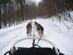 Dogsledding In New England: A day of adventure at Lake Elmore, Vermont