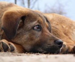 Weird Dog Behavior Explained