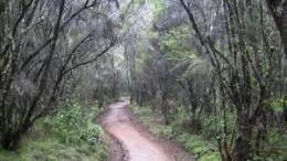 Beautiful rainforest at the base of Mt Kilimanjaro