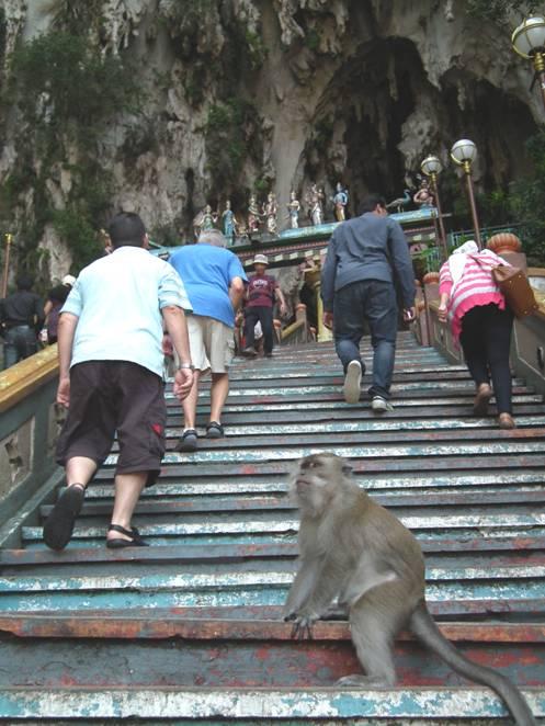 Monkeys on steps of Batu Caves