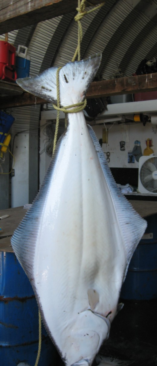 Freshly-caught local halibut.