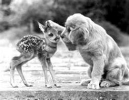 Real Friends don't care about race, age, gender or species.