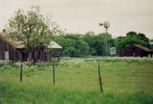 Wild flowers, Texas hill country around Austin.