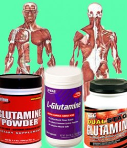 Creatine vs Glutamine - Benefits of Glutamine
