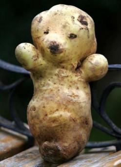 A teddy bear potato. Aw!