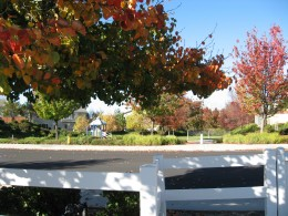 Fall colors in Temecula