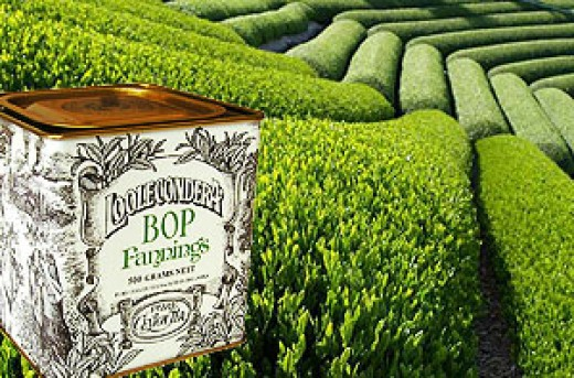 One of the places where finest tea is produced in the world.