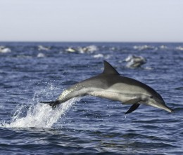 Are these dolphins also useless eaters to be poisoned along with the human useless eaters?