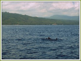 Dolphin Tour at Lovina, which usually starts in morning.