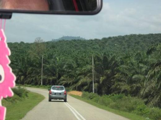 Follow-the-leader through Malaysia