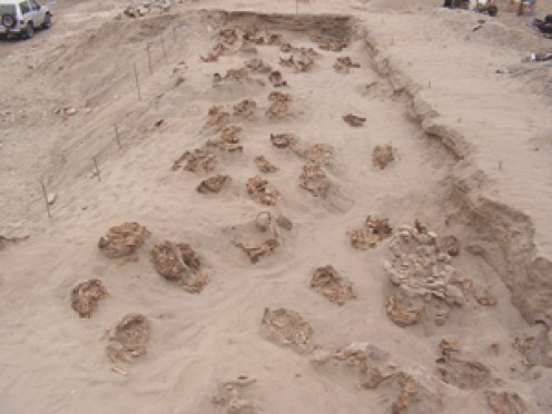 "Skeletal remains at the site (photo by ""Archaeology"" magazine)"