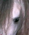 Equine Vision: How Horses See