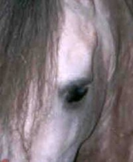 Equine vision is different from human vision.