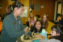 Reptiles are a fascinating subject for children - an interest that should not be squandered.