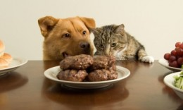 Nutrition Needs of Pets