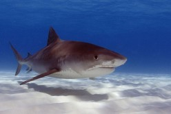 Global Shark Attacks 2012