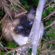 floppycats profile image
