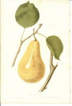 free cross stitch chart Pear on tree