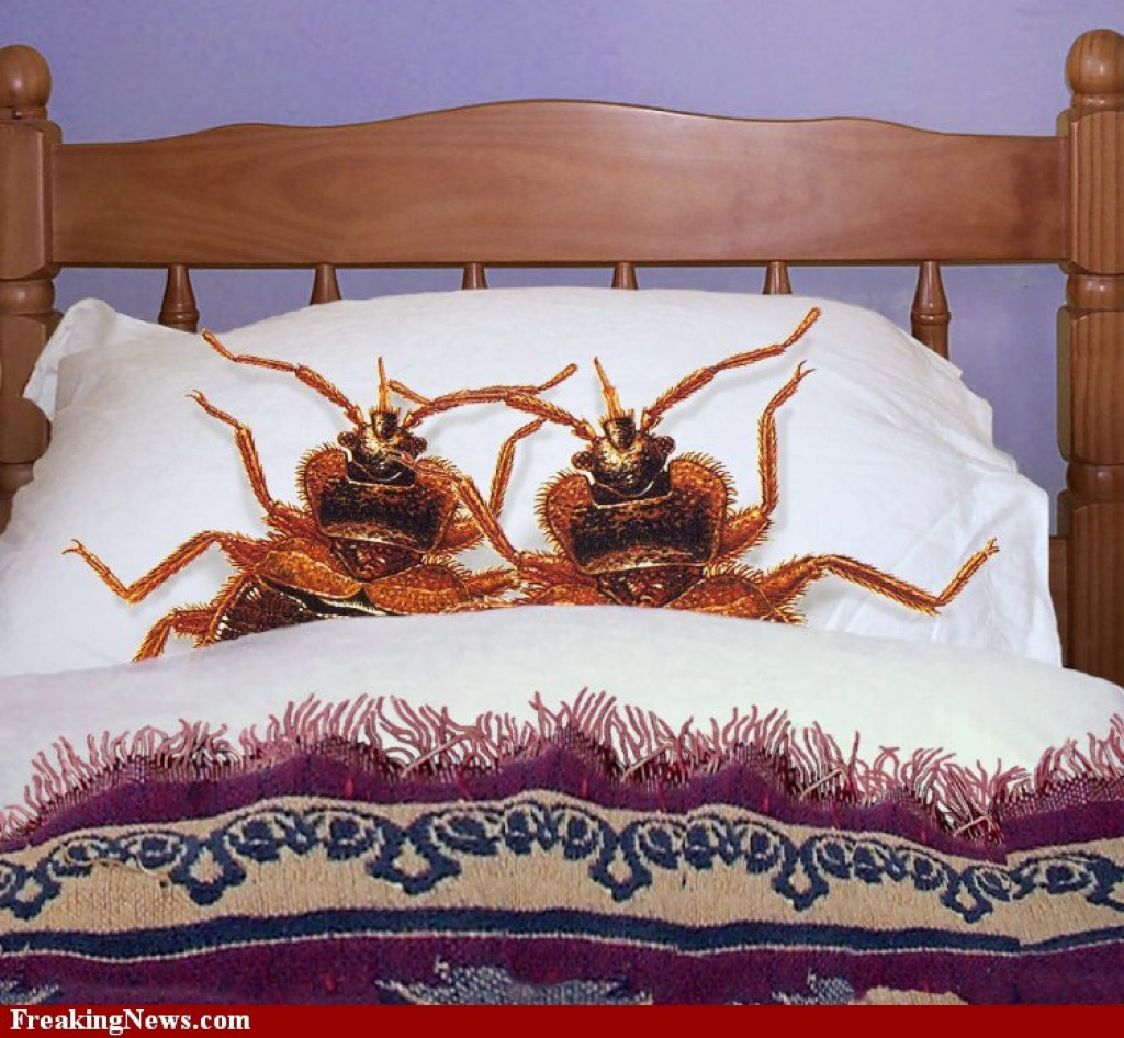 Can Pets Bring Bed Bugs Into Your House
