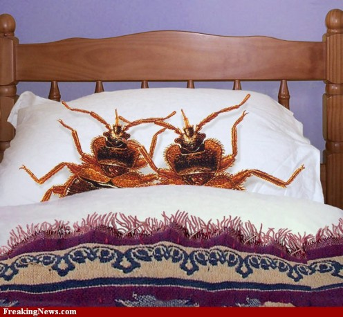 You may unknowingly bring bed bugs home from your travels. Unless you want to share your bed or house with them....know their ploy and stop the bug right there.
