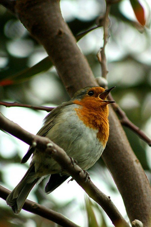 Beautiful and Poetic to us, but a matter of life and death for a Robin.