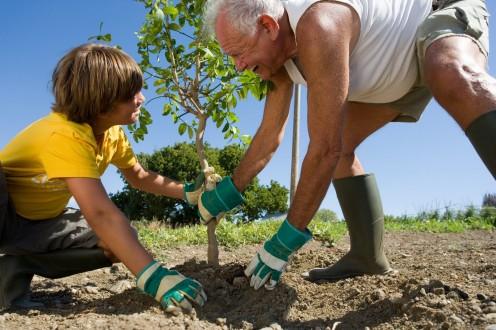 Plant a Tree, Save a Life
