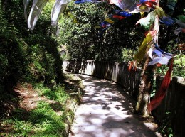 Fluttering prayer flags near the road
