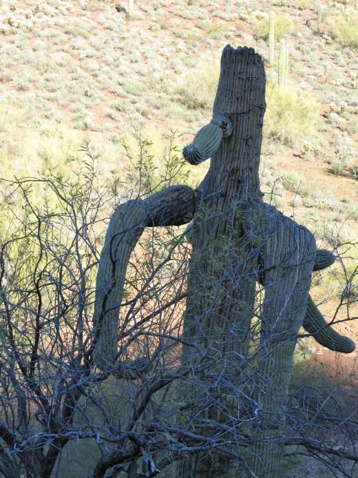 Saguaro Man