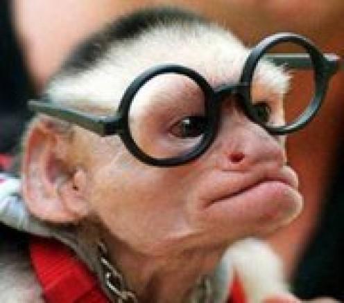 Whining Monkey
