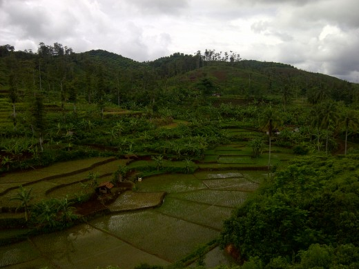 Beautiful terraced paddy fields at Cikidang,  Pelabuhan Ratu.