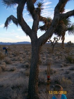Our Own Christmas Pictures with Joshua Trees - Picture Slide Show
